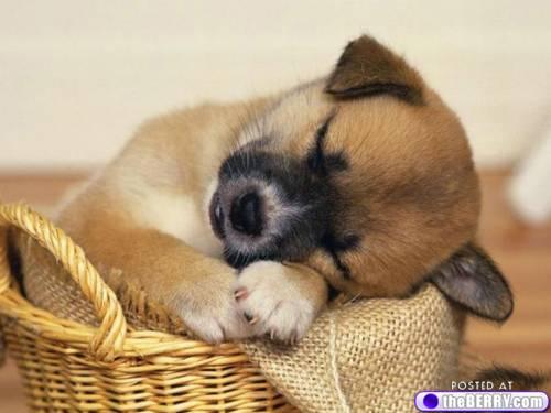 a-sleepy-puppies-4
