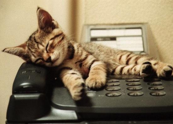 Sleepy-Kitty-tabby-cute-cat